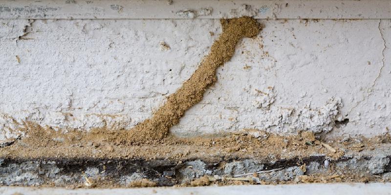 termitas-en-Colmenar Viejo